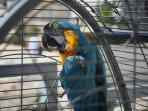 Meet Coco the resident Parrot.