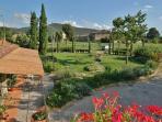 Il Moro novo Private garden wiev from my terrrace