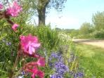 Primavera, Uplyme. bel paese passeggiate nei vicoli