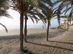 Palmeral en la playa