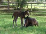Mares give birth from August to mid November each year. Guests are welcome to watch.