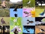 Naturaleza del Parque Nacional de Monfragüe y actividades de Casa Babel