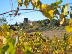 Domaine de la Bade - Surrounded by vineyards and olive groves