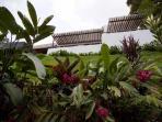 Jardin jouxtant la forêt primaire