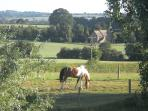 Walk out of the garden, into the field and go and stroke the horses