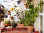 Terraza detalles de plantas