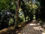 Viale per il parco