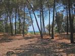 pine forest on the beach in the the farm of the agriturismo