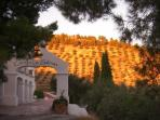 Sunset over the olive groves