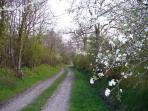 Chemin propice à la balade au printemps