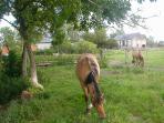 centre équestre et ses chevaux Hensons Ferme relais de la baie de somme