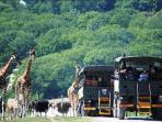Port Lympne Zoo