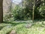Our bluebell woods, perfect for exploring