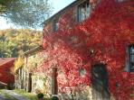 Canadian Vine in Autumn - a lovely time for walking