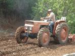 Arando el terreno para plantar papas