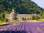 Senanques Abbaye