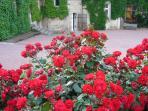 Les roses de juin