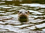 The area is full of wildlife - You can see Otters all year round