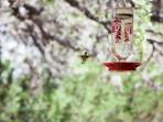Hummingbird feeder on porch