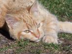chats et petits chats pour le plus grand bonheur des petits
