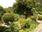 jardim ao lado da casa
