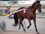 Trotting Races - a weekly event and great fun to watch.