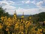 panorama#ginestre#giallo#fiori#montagna#val di chiana#monte amiata