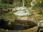 bassin  nenuphars ,iris ,poissons rouges