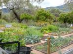 Our vegetable garden supplies us with much of our food- enjoyed by us and our guests!