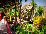 La Vedette Villa Margarita - Valsequillo Gran Canaria - Garden surrounding vue 2