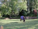 The paddock at Sweet Apples Barn