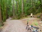 local forest trails, lovely walking, easy cycling