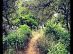 A trail near Uzès, captured by Birgit Ebel, a guest, in August 2013.