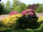 Flowering garden in May