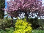Arbre en fleur de la propriété au printemps