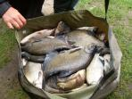 Mixed bag of fish including bream