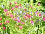 Wild flower tump