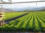 Farmland in the local area. Come and explore the region and the local produce.