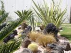 Exotic Planting at Horizon Sky