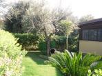giardino con alberi di ulivo