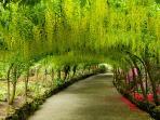 Bodnant Gardens 45 minutes