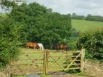 A 60 acre farm and the whole of North Devon & Cornwall for you to explore!