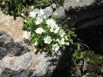 fiori che si possono ammirare nelle escursione e passeggiate in montagne nel Parco
