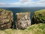 Watch sea birds on the cliffs of Handa