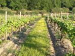Take a stroll along the local lanes and enjoy the vineyards