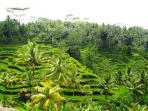 Bali is famous for its beautiful rice terraces.