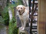 dog at the village