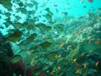 Stunning coral reefs are perfect for snorkelling and dive trips. The whole coastline is spectacular.