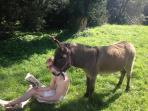 Bim, a smart donkey