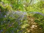 The beautiful bluebell woods above the villa are stunning in May